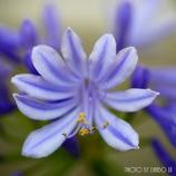 愛の花 <8>