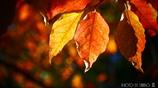 それぞれの秋 <25>