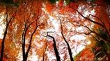 秋なんだなぁ~ <26>