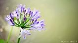 愛の花 <3>