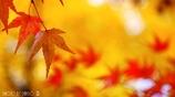 秋なんだなぁ~ <13>