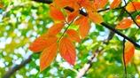秋に染まる <4>