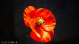 繁栄の花 <2>