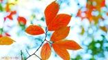 秋に染まる <6>