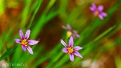 春の最新開花情報 <1>