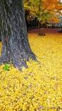 黄色で覆い尽くせ <2>
