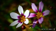 春の野草花 <5-4>