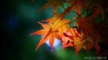 秋に染まる <12>