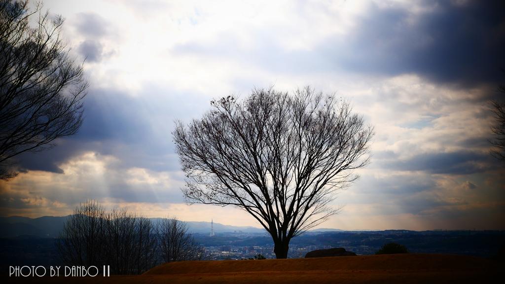 冬の欅丘 <2>