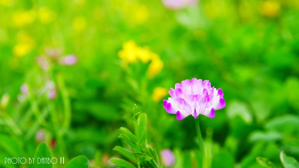 春のお届け物 <4>