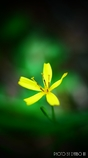 僅かに咲く花 <2>