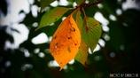 小さい秋 <1>