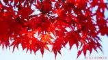 秋に染まる <2>