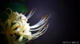 天上に咲く白花 <5>