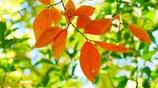秋に染まる <22>