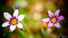 野に咲く花 <26>