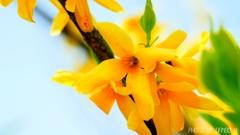 春の希望 <1>
