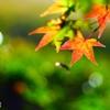 秋なんだなぁ~ <5>