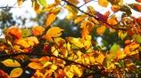 それぞれの秋 <21>