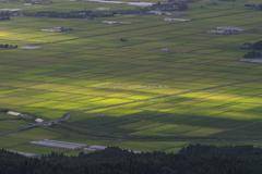 朝陽の当たる水田