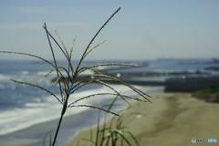 海の見える風景 秋