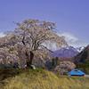地蔵&枝垂れ桜&雪山(午前)
