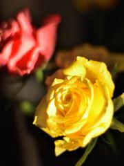 黄金色に輝く時間