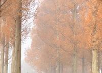 NIKON NIKON D5300で撮影した(朝霧)の写真(画像)