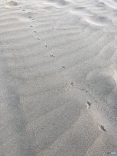 浜辺の足跡だあれ?