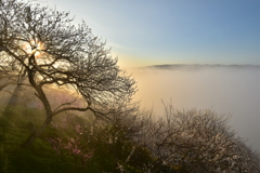 雲上の情景