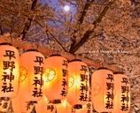 『❀.*・゚平野神社.゚・*.✿』