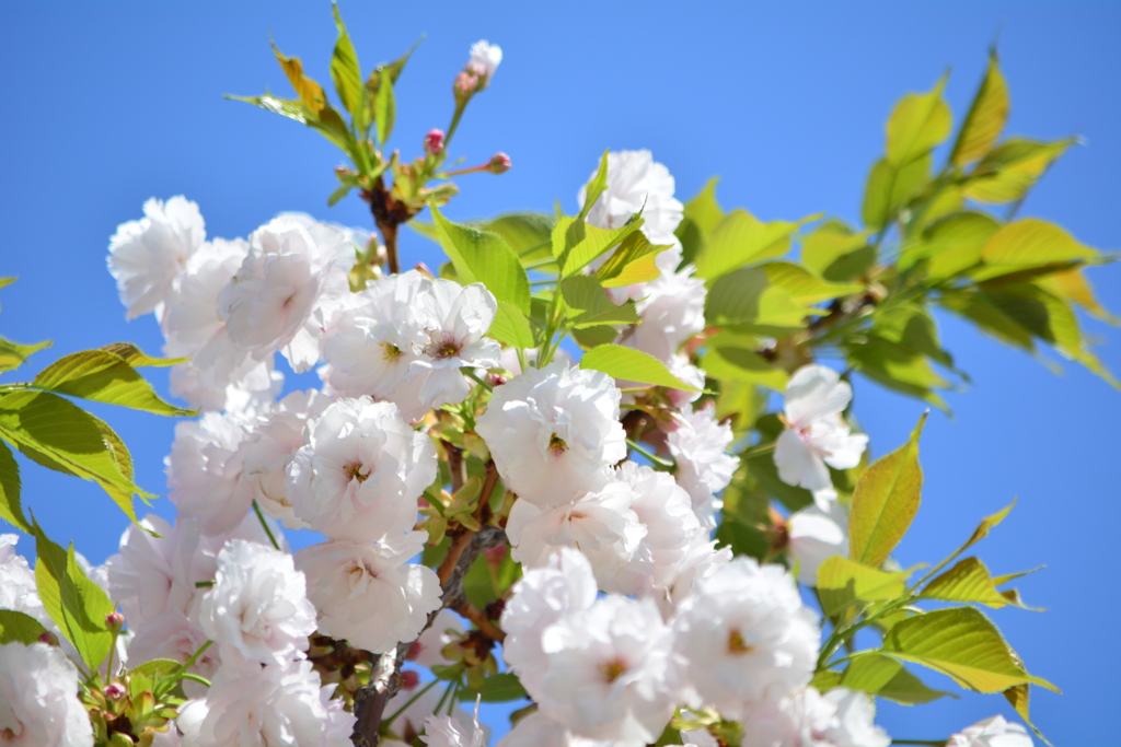 春・新宿御苑パート3