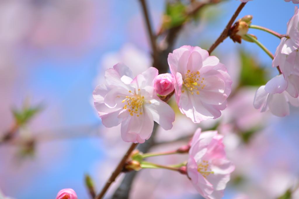 春・都立木場公園シリーズ3
