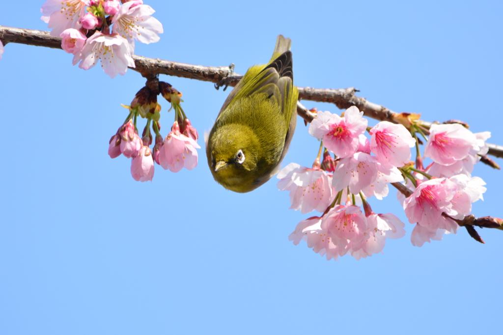 春・都立木場公園シリーズ