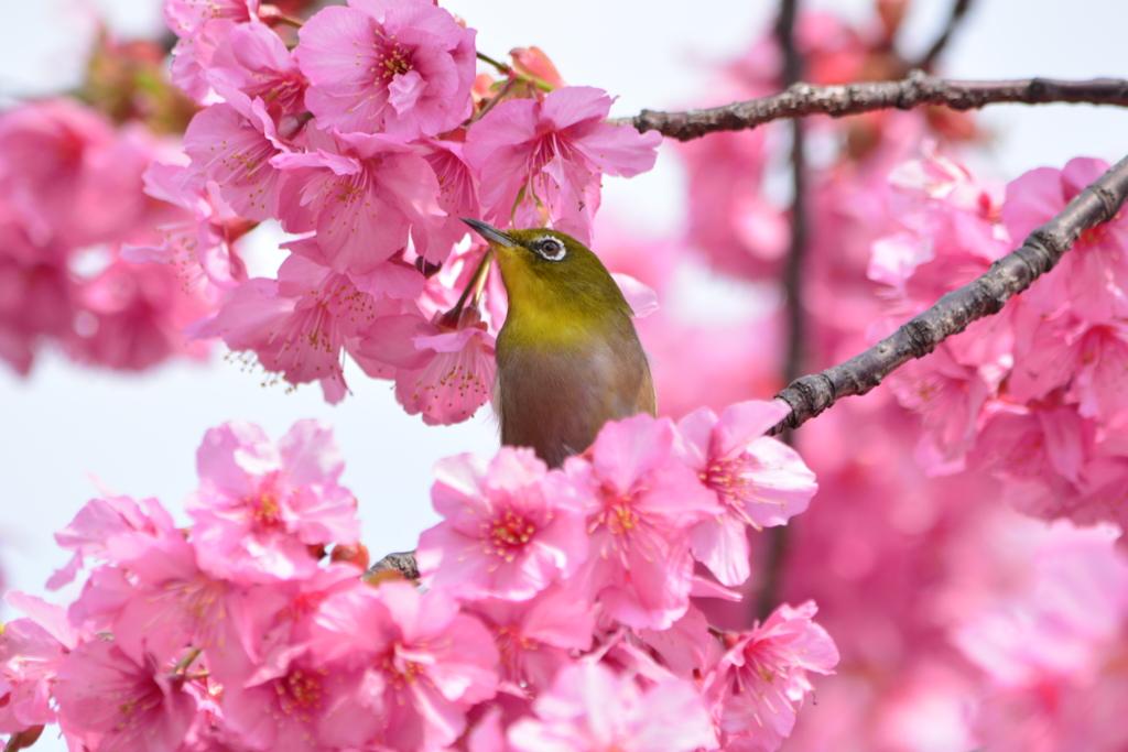 春・都立木場公園シリーズ2