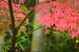生物園と水車小屋の紅葉