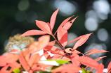 春・新宿御苑パート5