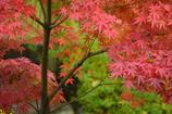 水車小屋の横の紅葉
