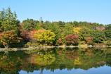 日本庭園からの風景