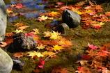 日本庭園・池の中・紅葉