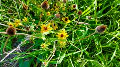 自然の生け花