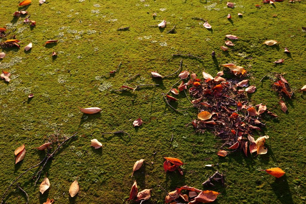 秋の苔と落ち葉