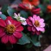 ガーデニングの花(左)