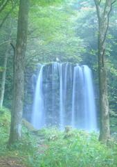 緑に包まれる唐沢の滝