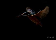 暗闇に羽ばたく青い影