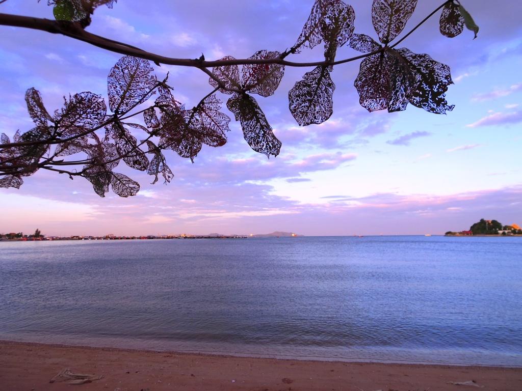 タイの朝 葉っぱが魅力的 @シラチャ