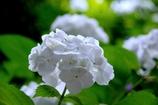 Pure White  @本光寺