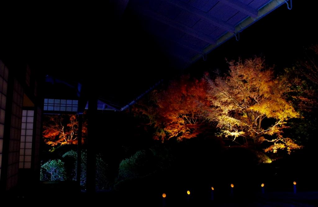 丈山苑ライトアップ #2