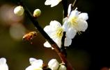 かき入れ時の蜂