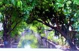 バンコクの小さな川で